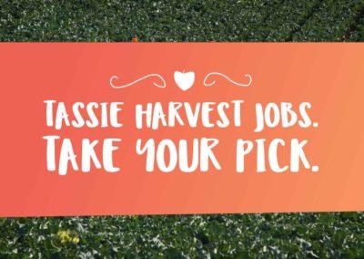 Tassie Harvest